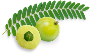 Gesunde Haut mit BLOOM BEAUTY ESSENCE® Amla Frucht